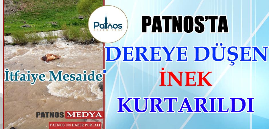Patnos'ta Dereye düşen ineği itfaiye kurtardı
