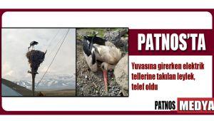 Patnos'ta elektrik tellerine takılan leylek, telef oldu