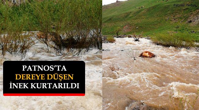 Patnos'ta Suya Kapılan İnek Kurtarıldı