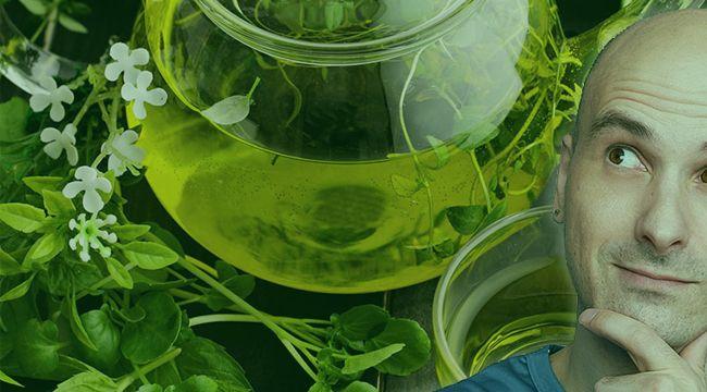 Yeşil çayın saç büyümesini hızlandırdığı bulunmuştur.